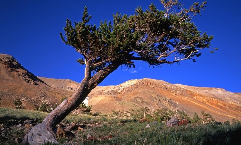 Arapho National Forest Colorado