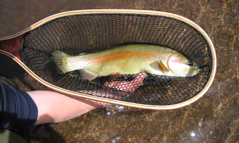 Trout from South Platte River