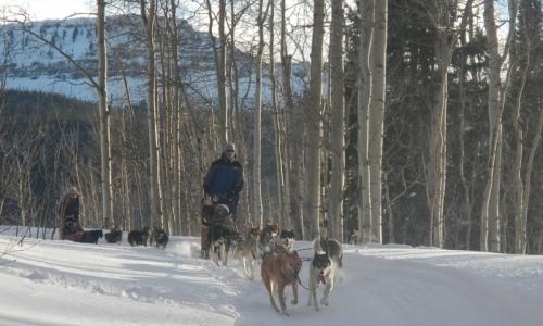 Breckenridge Dog Sled